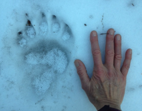 Human hand next to track in snow