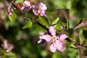 Flowers on a bush